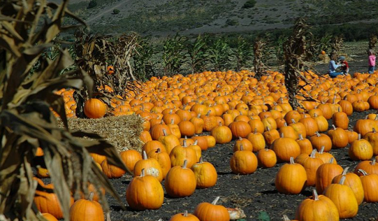 In the Spirit of Halloween: The Spread of Tradition