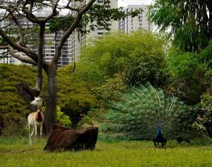 Image credit: Antelope and Peacock taken by Daniel Ramirez under Public Domain.