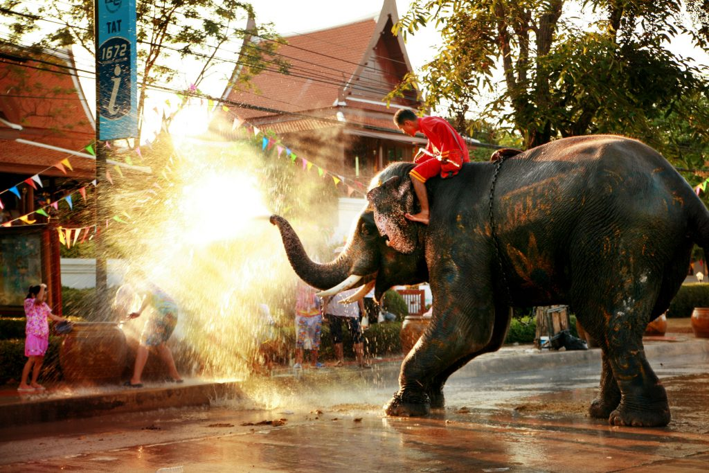 asian elephant spraying water during the songkran festival celebration