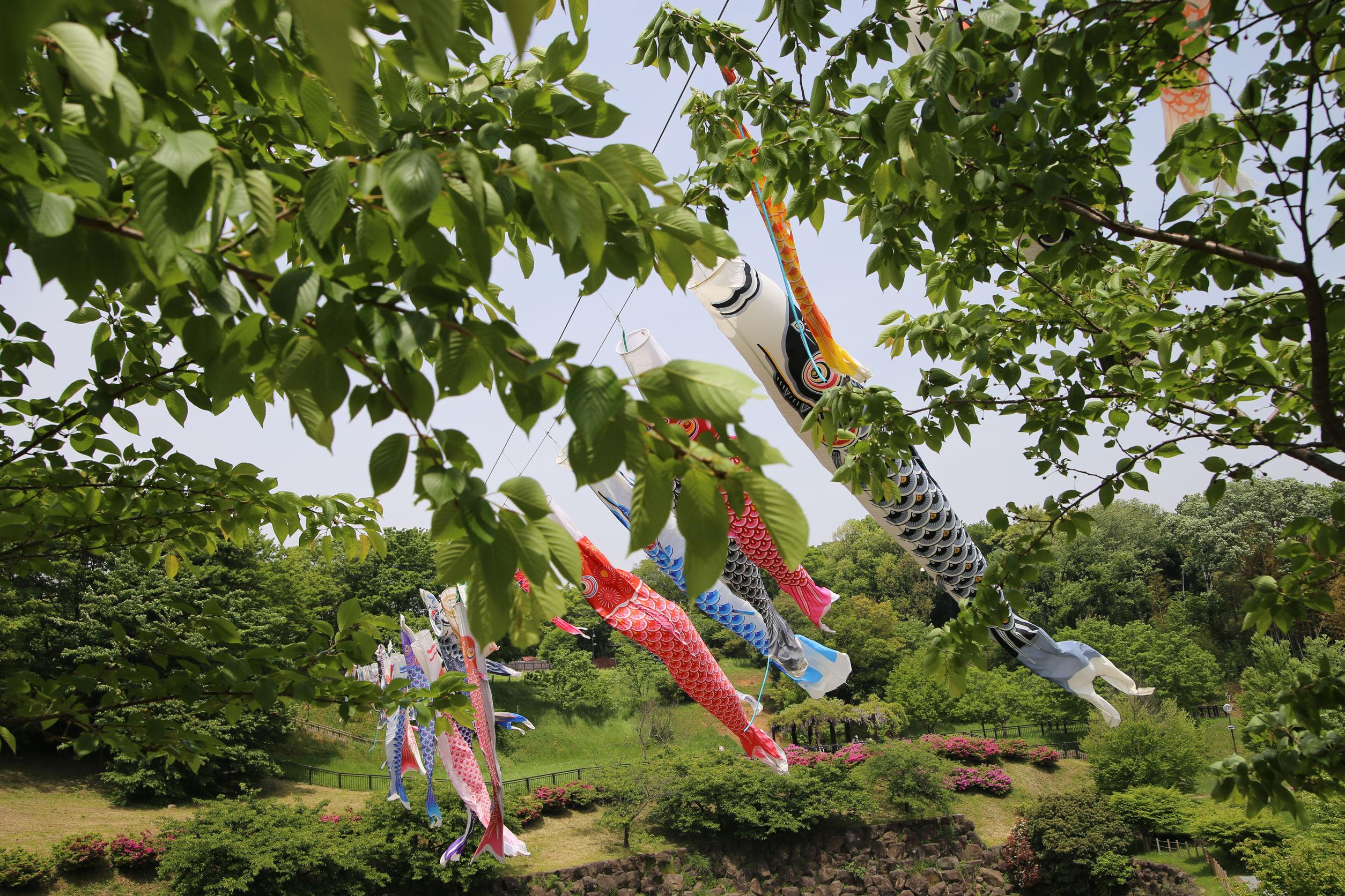 carp streamer celebration Ōgata Renkyū