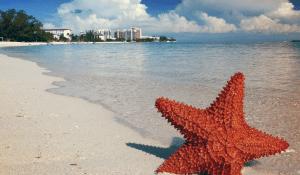 starfish-in-shore