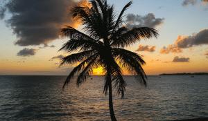 beach-palm-tree