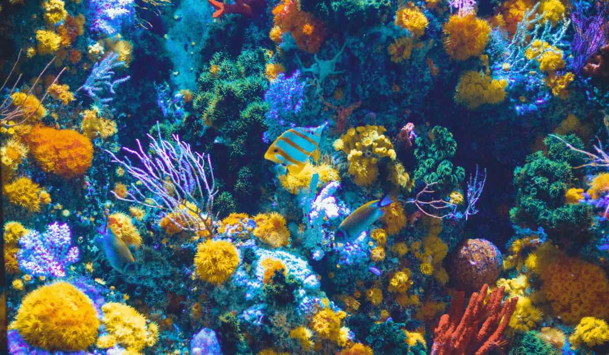 colorful-coral