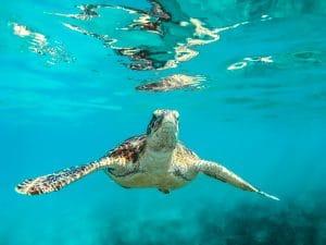turtle-swimming-ocean
