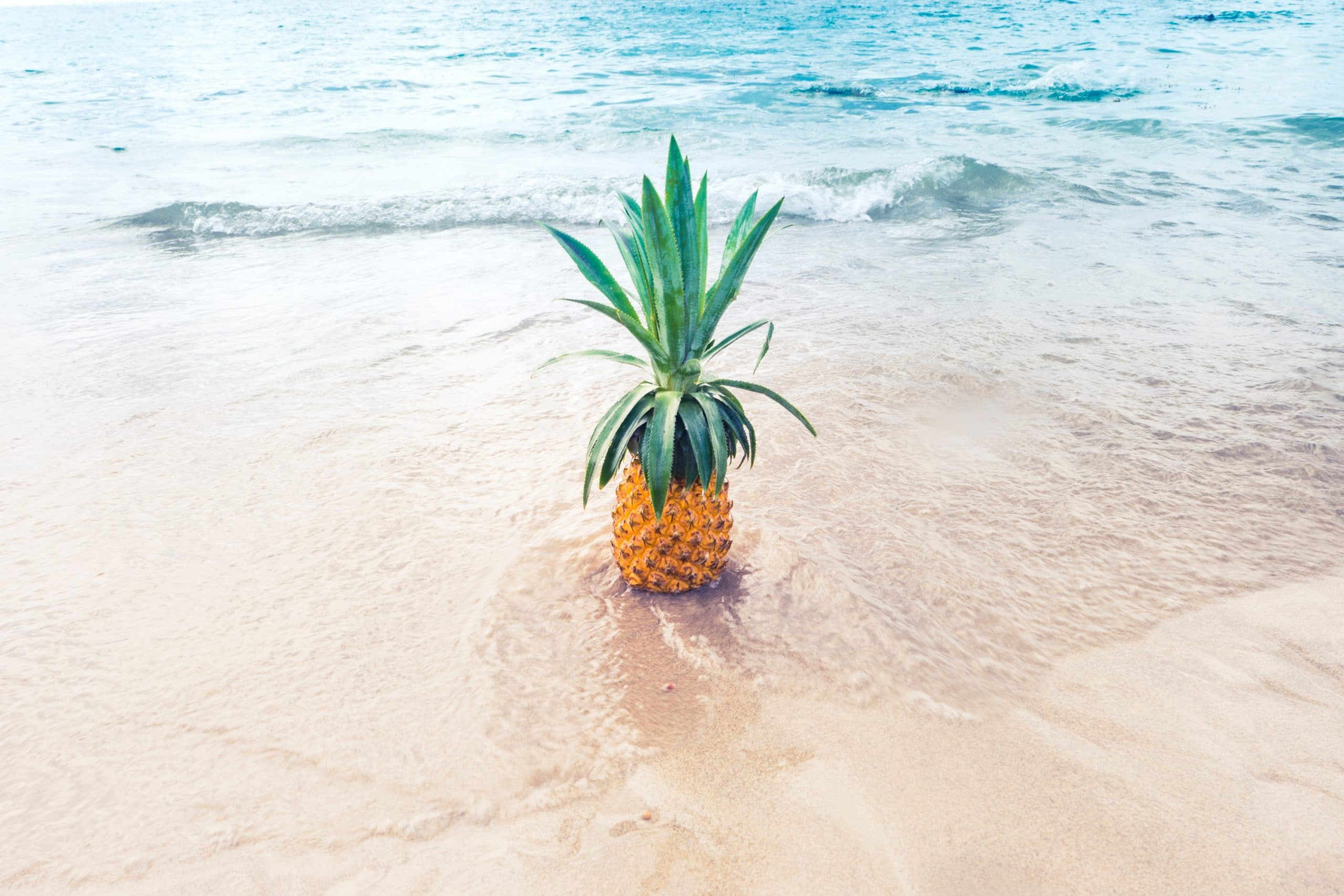 pinneapple-in-the-beach-summer-climate