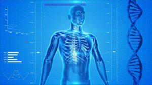 human-body-software